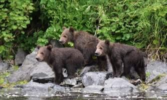 RBL 3 Bears Marrano alaska rusts bear viewing anchorage