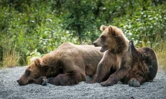 Jodyo photos 17 C0731 016 alaska rusts bear viewing anchorage