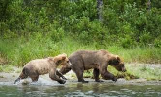 Jodyo photos 17 C0731 029 alaska rusts bear viewing anchorage