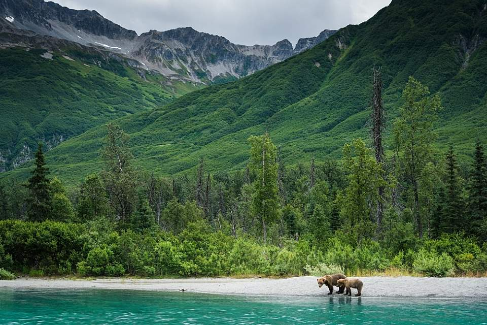 Bears and turquoise water in Lake Clark National Park