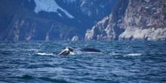 Seward ocean excursions 14
