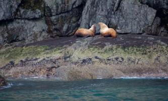 Seward ocean excursions 10