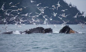 Seward ocean excursions 5