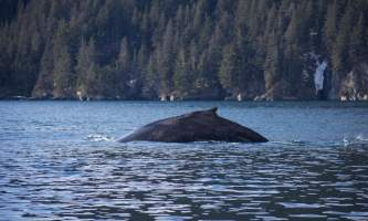 Seward ocean excursions 13