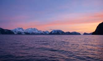 Seward ocean excursions 19