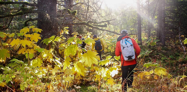 Hikers trek through an Alaskan forest that's bathed in golden sunlight.