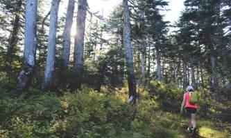 Seward wilderness collective Edit Hannah Woods