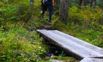 Seward wilderness collective Edited Boardwalk Hikers
