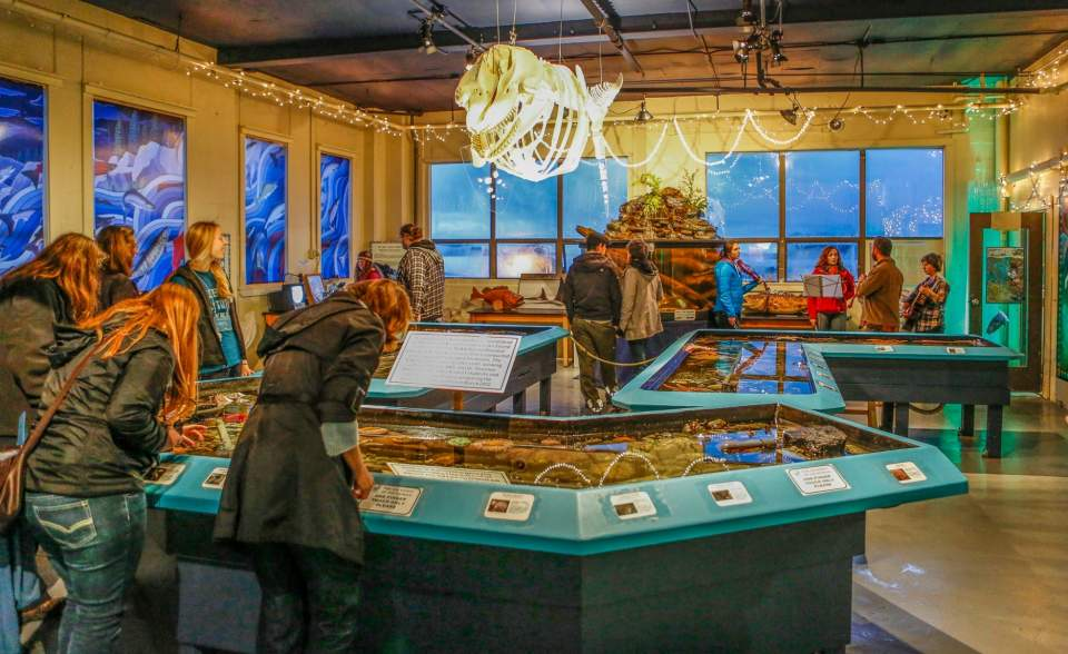 People explore sealife touch tanks at the Sitka Sound Science Center.