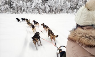 Snowhook adventure guides of alaska dog sledding tours PSX 20190123 234635