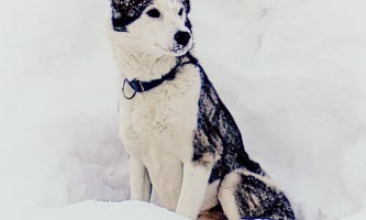 Snowhook adventure guides of alaska dog sledding tours PSX 20190225 220756