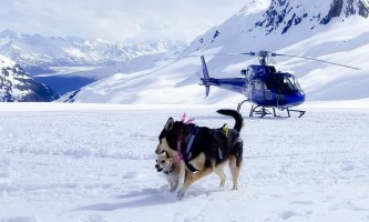 Snowhook adventure guides of alaska dog sledding tours PSX 20190517 175921