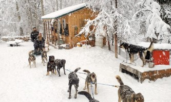 Snowhook adventure guides of alaska dog sledding tours PSX 20191119 125551