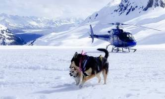Snowhook adventure guides of alaska dog sledding tours PSX 20190517 175921