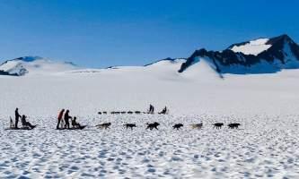 Snowhook adventure guides of alaska dog sledding tours PSX 20190706 101638