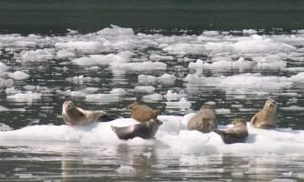 Stan stephens cruises valdez Alaska Channel 5