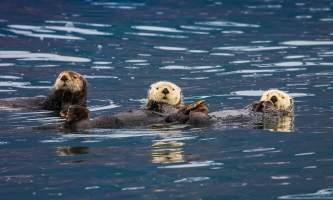 Stan stephens cruises valdez Alaska Channel 7