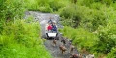 Girdwood Summer Sled Dog Adventure