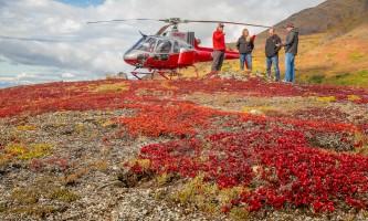 Alaska temsco denali hike Tundra 5878 Copyright Ron Gile 2015 TEMSCO Helicopters Denali Heli Hike