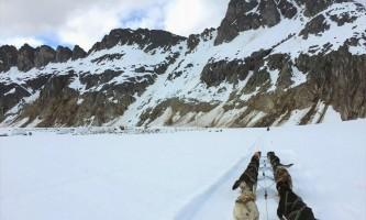 Alaska temsco mendenhall dog sledding View on Dog Sled Edited 1 TEMSCO Mendenhall Dog Sledding