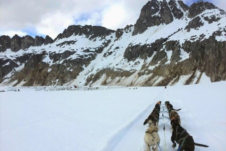 TEMSCO Mendenhall Dog Sledding