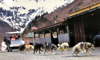 Alaska temsco mendenhall dog sledding Summer Dogs Cart in Motion 1 TEMSCO Dog Sledding Summer Camp