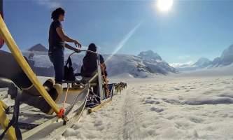 Alaska temsco mendenhall dog sledding Dog Sled Low Angle TEMSCO Mendenhall Dog Sledding