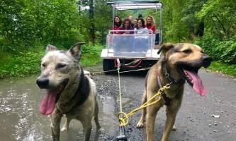 Alaska temsco mendenhall dog sledding Dog Sledding Summer Camp mushing cart TEMSCO Dog Sledding Summer Camp