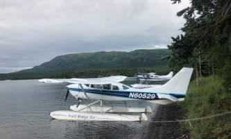 Trail Ridge Air Bear Viewing IMG 73872019