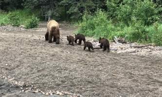Trail Ridge Air Bear Viewing IMG 74242019