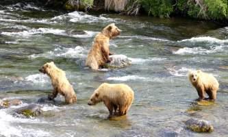 Trail Ridge Air Bear Viewing Katmai20152019