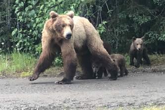 Trail Ridge Air Bear Viewing IMG 73972019