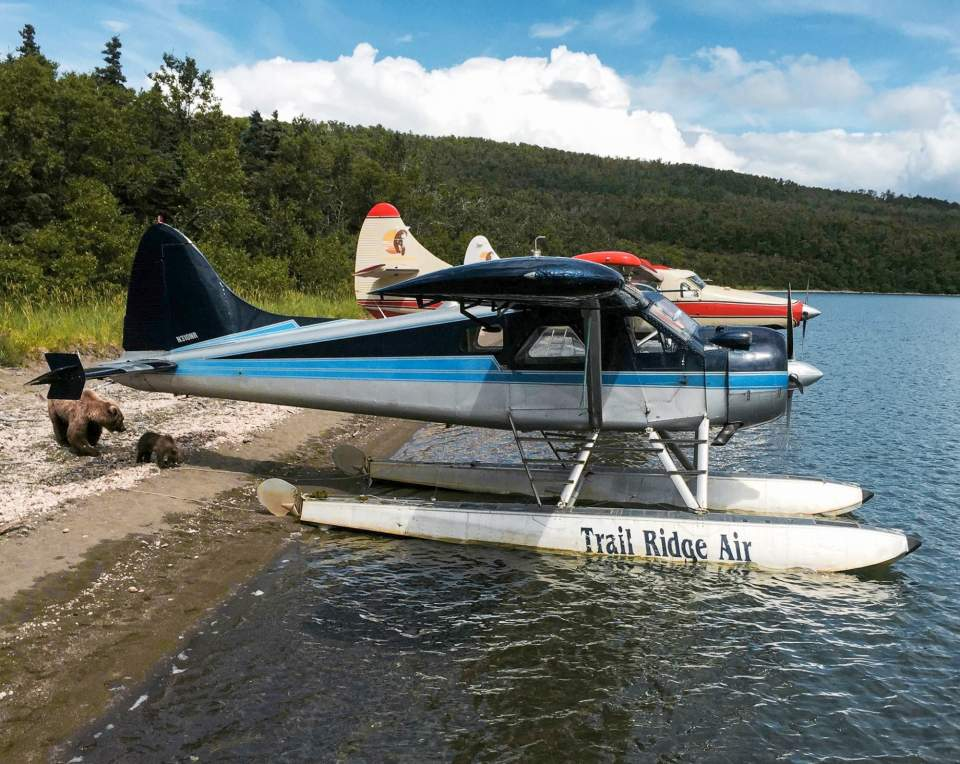 A bear and her cub check out two float planes docked on the beach.