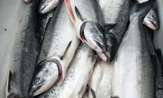 Underdog sport fishing IMG 5340