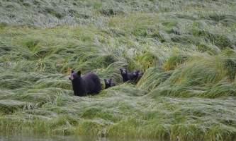 Bears hartney bay wendy ranney
