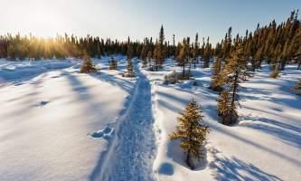 HQ Winter Lisa Hupp USFWS alaska untitled