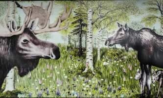 Moose Meadow 7290625 alaska untitled