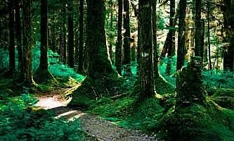 Alaska parks trails Bartlett Cove Forest