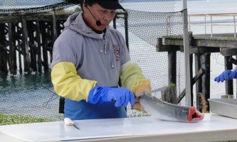Copper river salmon jam DSC04485