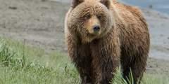 Alaska Bear Camp 2-5 Day Adventures