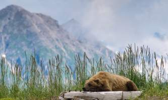 Alaska bear camp Bearcamp log grass dante DANTE RAUL APAZA great alaska bear camp