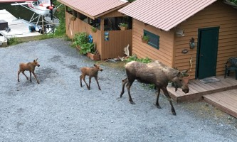 Alaska IMG 2825 jpg 2016