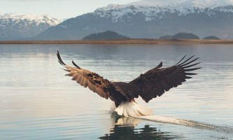 Between beaches cabin rentals Bald Eagle 6 19