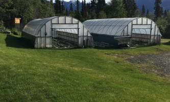 Alaska currant ridge mccarthy kennicott IMG 2116 2018