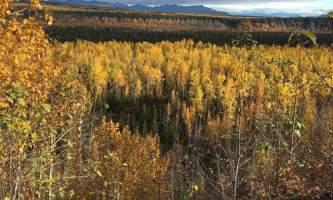 Alaska currant ridge mccarthy kennicott IMG 1490 2018