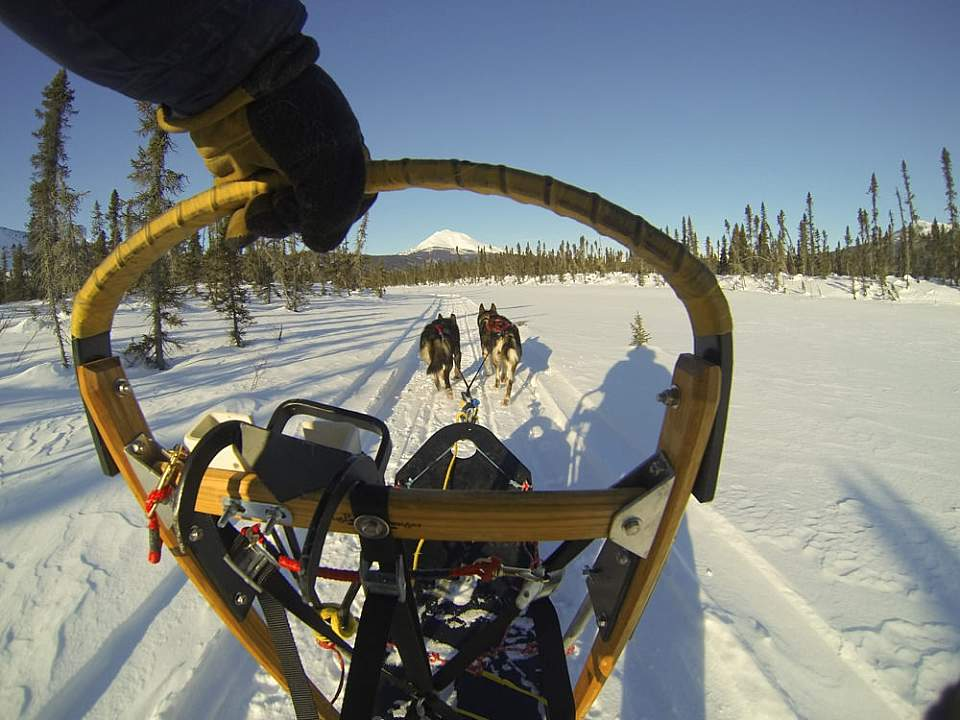 Most winter guests want to learn dogsledding: you'll get individual lessons and hands-on experience so you can drive your own team on the first day.