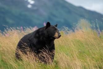 2019 Bear2019