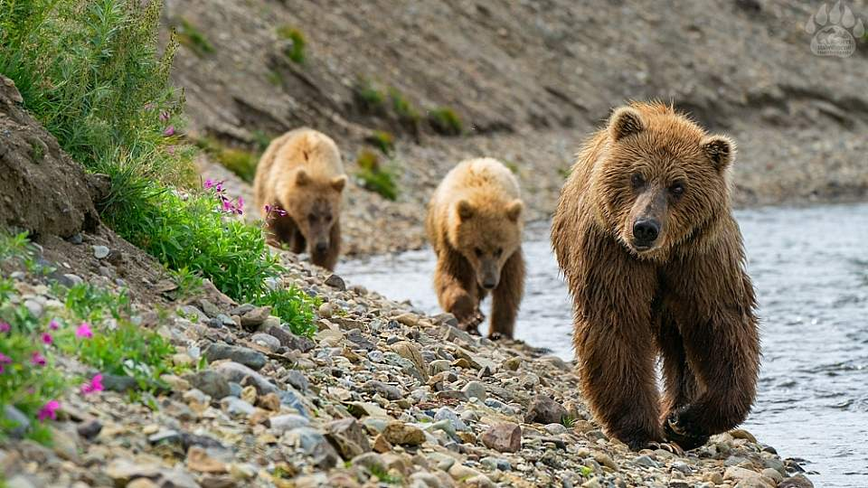 Each day you'll wake up on the boat before boarding your skiff and going ashore to watch and take photos of bears.