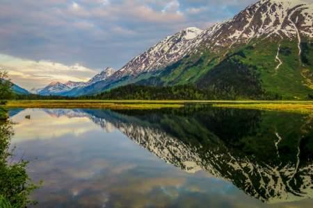Moose Viewing at Tern Lake