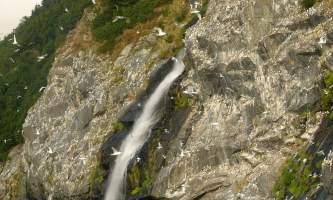 Kittiwake rookery prince william sound kittiwake rookery patrick lemons Patrick Lemons kittiwaker rokkery waterfall